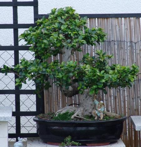 Bonsai-Vortrag und Workshop